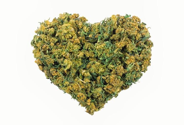 Conserver son cannabis durant la quarantaine