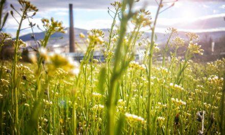 Investir dans des infrastructures et une industrie durables