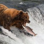 Des expériences uniques sur la faune sauvage à attendre après la pandémie