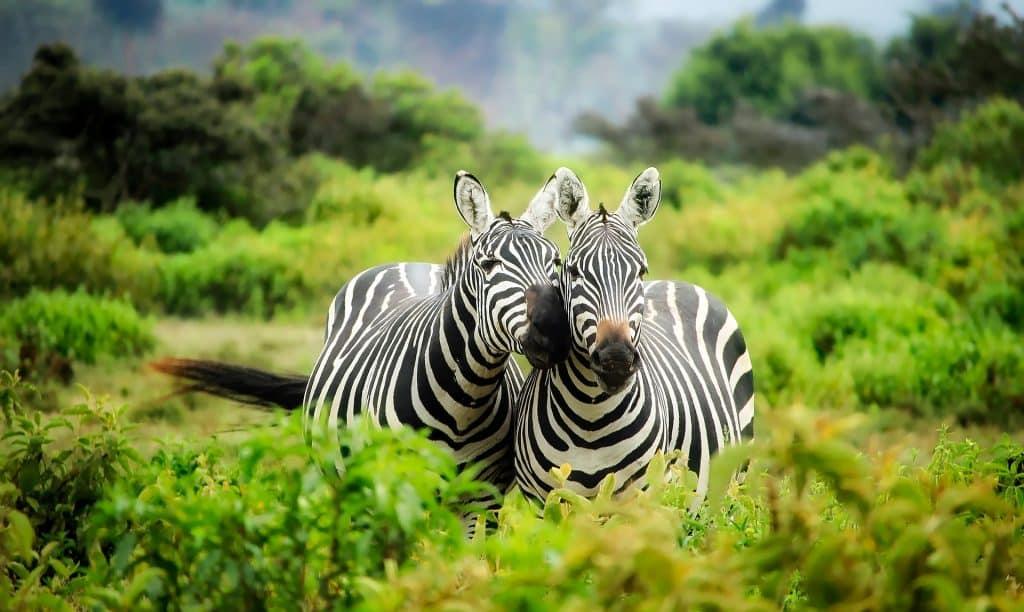 Une escapade en Afrique