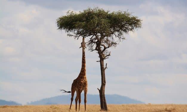 Voyager en Afrique : les choses à découvrir